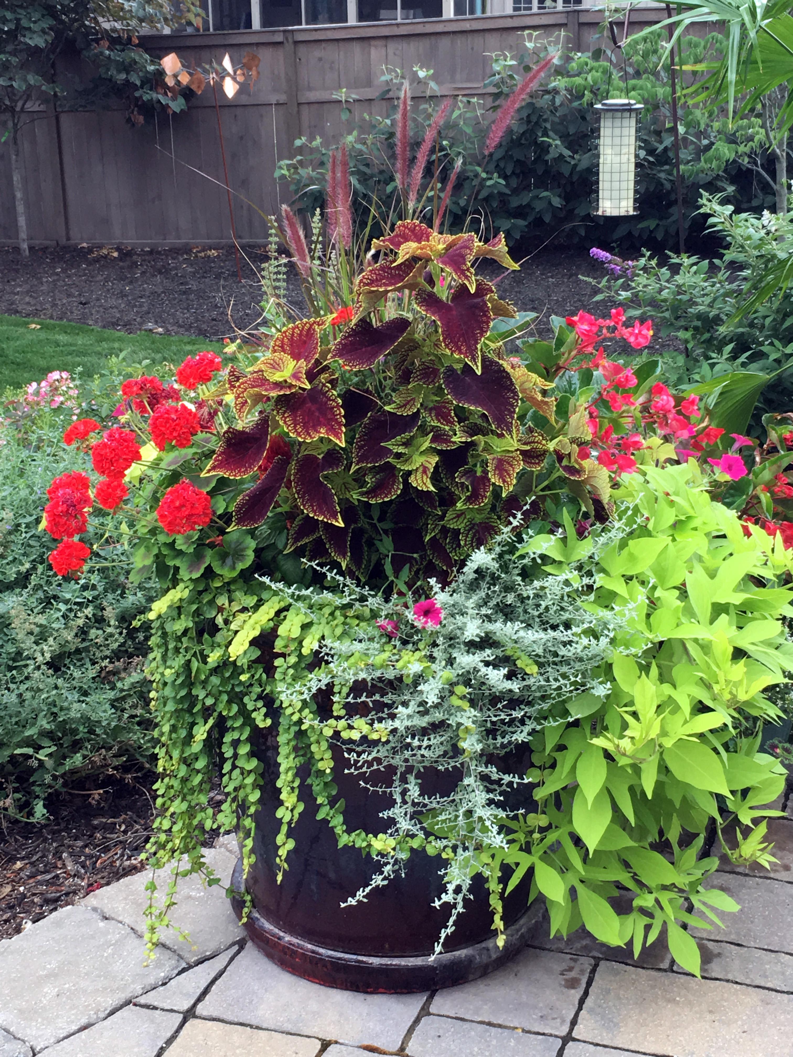 Container Gardens & Seasonal Decor